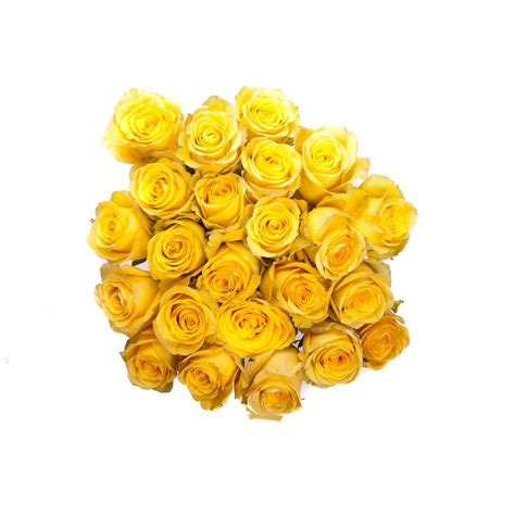 yellow roses valentines day valentine s day yellow roses flower muse