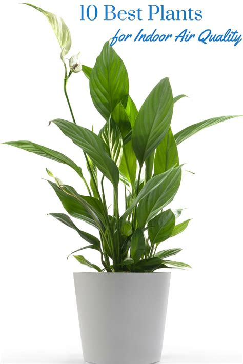 best plants for indoors 10 plants for better air quality