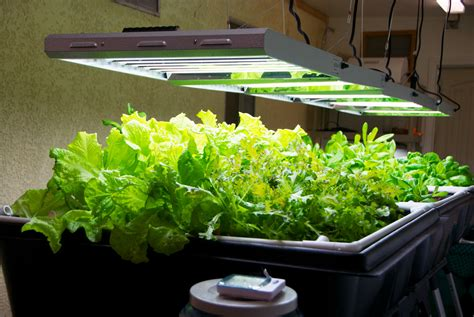 complete indoor system ready  plug  grow