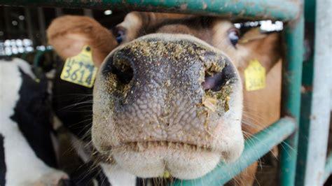 alimenti contenenti zinco medicinali veterinari contenenti ossido di zinco e la