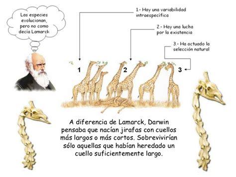 imagenes de las jirafas de darwin evoluci 243 n 3 teor 237 as evolutivas