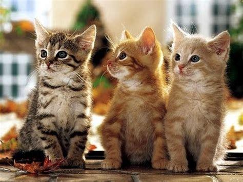 Kuas Cat 3in trois petits chats comptine pour enfants cover