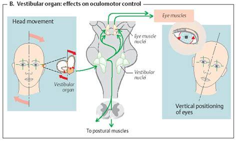 vestibulocochlear reflex balance and eye movements