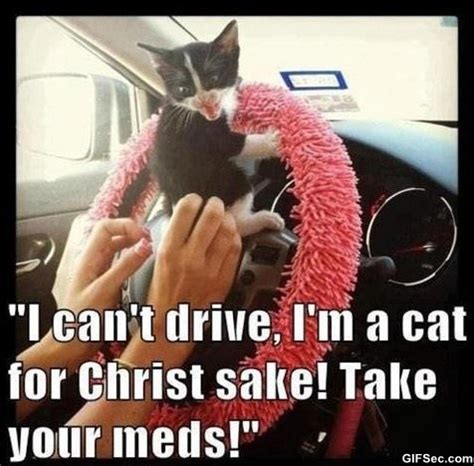 Funny Memes About Driving - meme driving cat