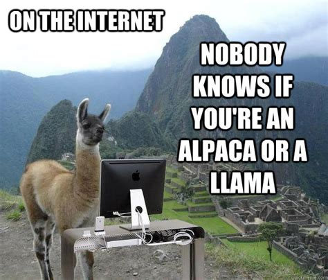 Llama Memes - on the internet nobody knows if you re an alpaca or a