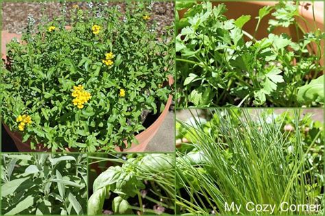 easy herb garden my cozy corner how to plant an easy herb garden