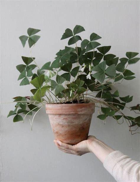 foto piante da interno piante verdi da interno foto piante da appartamento con