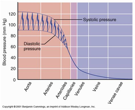 blood pressure swings cardiac equations