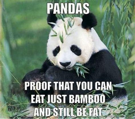 Meme Panda - 84 stupid panda memes