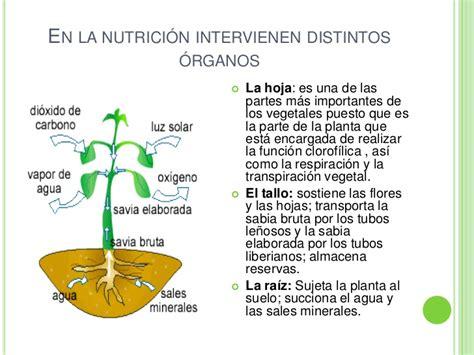 que es layout de una planta nutrici 243 n en plantas y animales