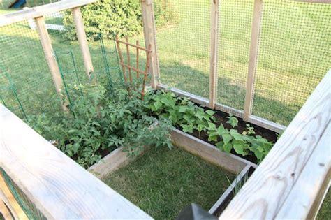 DIY Raised Bed Garden Enclosure   Hometalk
