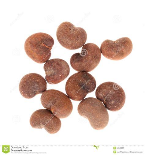baobab fruit baobab seed is baobab tree seeds stock image image of bite fruit
