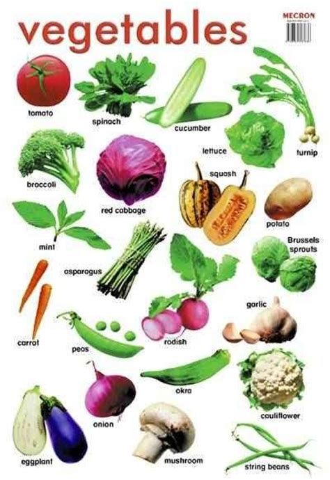 vegetables with english names best 25 vegetables names with pictures ideas on pinterest