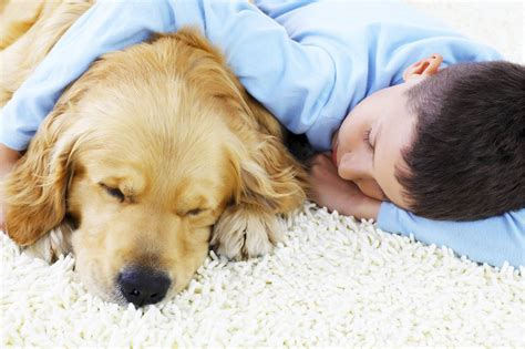 puppy on carpet boy white carpet steamers carpet cleaners