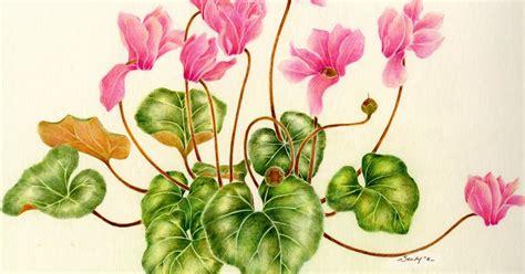 cyclamen color april blossom cyclamen color pencil