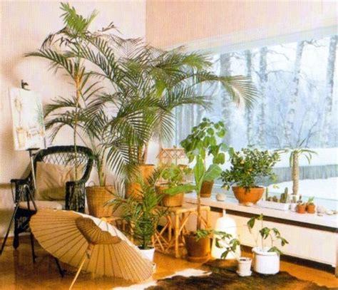 indoor plants   south facing window