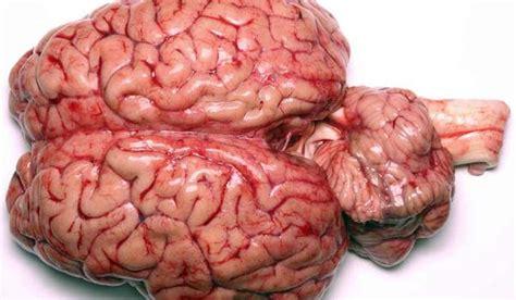 imagenes reales cerebro humano usamos apenas 10 do c 233 rebro mito ou realidade
