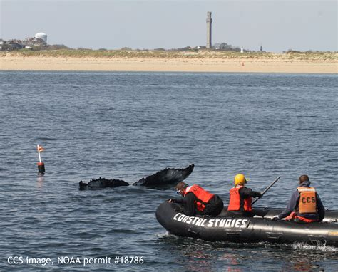 boating from boston to provincetown entangled whale freed off provincetown ma new england