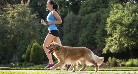 best dogs to run with running with your with best friend fitso