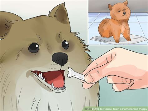 how to house a pomeranian 3 ways to house a pomeranian puppy wikihow
