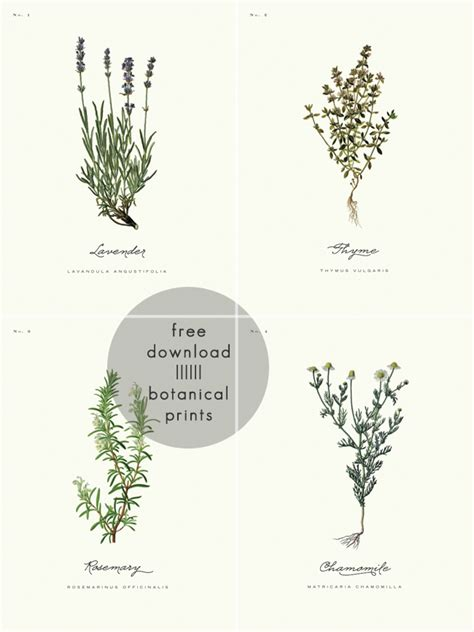 printable botanical art free printable botanical prints 01 a daily something