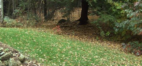backyard woods 7 things to do before fall greencare landscapes