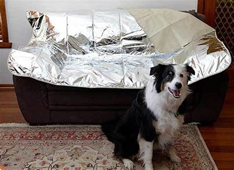 dog   couch  easy tips