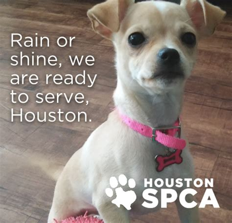 houston spca dogs houston spca to reopen adoption center wednesday pets houston