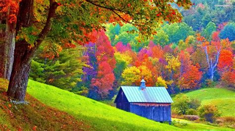 colorful tree wallpaper amazing colorful forest wallpaper