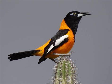 imagenes de venezuela flora y fauna flora y fauna de venezuela la reserva