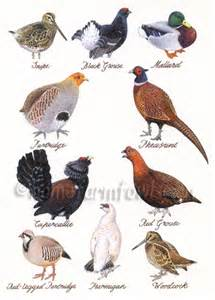 North American Backyard Birds British Game Bird Greeting Card Home Farm Fowls