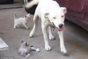 my had puppies and they all died alabama bulldog nurses four newborn kittens as if they own after their died