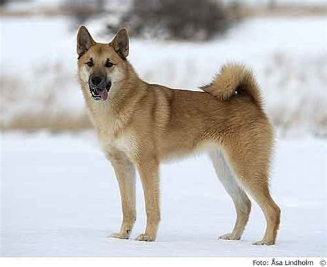 dogs similar to husky what are all the other types of dogs that are similar to a husky quora