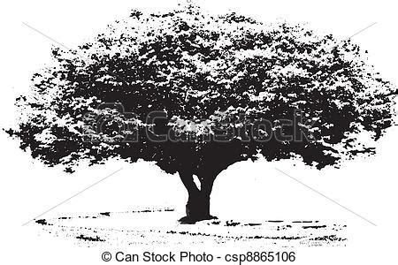 clipart bianco e nero clipart vettoriali di grande albero bianco e nero