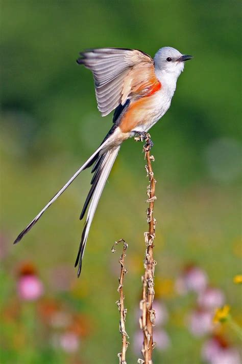 79 best images about birds of texas on pinterest