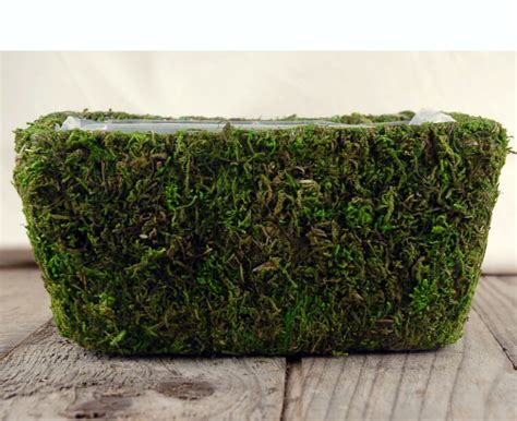 Moss Planters by Moss Planter 7 5in