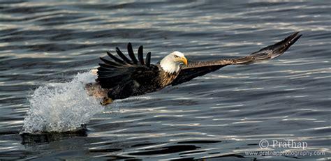 surefire tips  photographing birds  flight