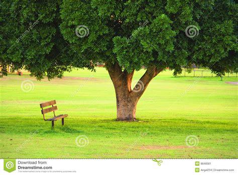 wood chair  tree   garden stock image image
