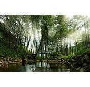 Nature Landscape Sun Rays River Bridge Trees Shrubs