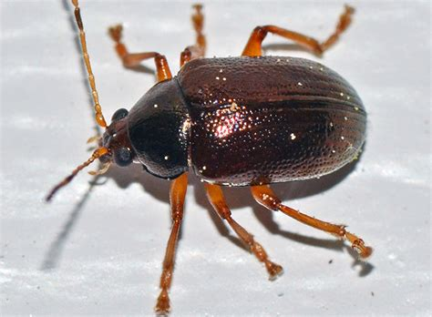 bug host axis terbaru 2018 photo gallery bugs and critters in my florida backyard