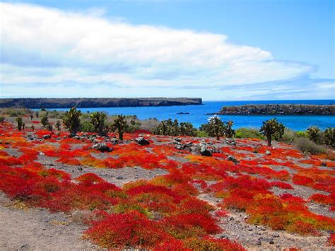 Ecuador Search 123 Best Galapagos Islands Ecuador Images On