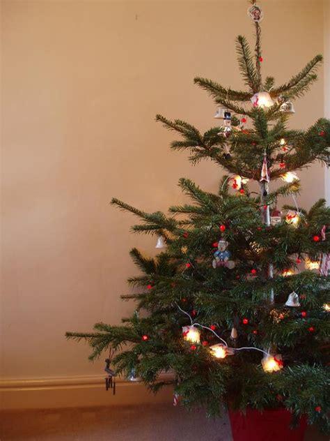 photo  traditional christmas tree  christmas images