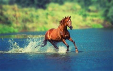 horse hd wallpapers, free wallpaper downloads, horse hd