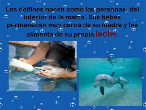 imagenes de la vida bajo el mar la vida bajo el mar delfines y ballenas