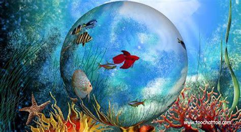 la bulle de poissons le screensaver le bocal de poissons exotiques