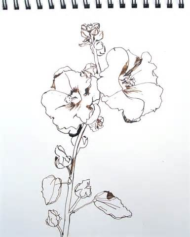 hollyhock flowers drawings