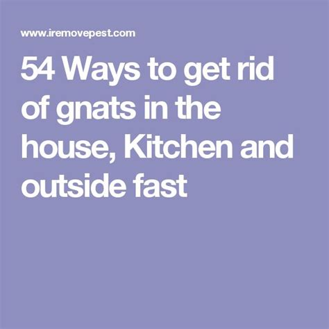 how to get rid of gnats in your house 54 ways to get rid of gnats in the house kitchen and