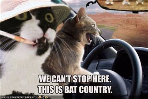 27 most funny bat meme pictures of all the time