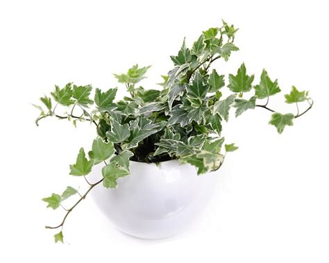 piante da interni poca luce 6 piante da appartamento che crescono bene con poca luce