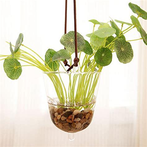 mkono hanging plant glass terrarium planter buy
